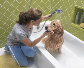 Handheld Shower for Pets